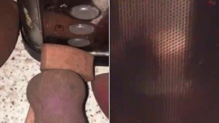 Mette la spugnetta per il make-up nel microonde: il sorprendente risultato dopo solo 1 minuto