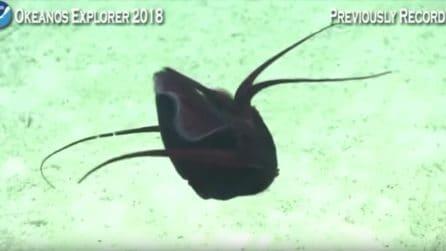 Una creatura mai vista prima di color rosso sangue: la scoperta degli scienziati
