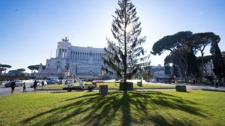 Spelacchio diventa una casetta in legno per i neonati di Roma