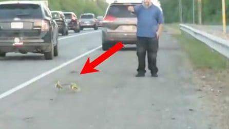 Pulcini cercano di attraversare la strada: il gesto degli automobilisti è esemplare