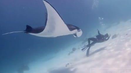 L'incontro ravvicinato tra il sub e una manta gigante