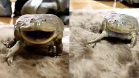 La rana lo guarda e ride: il bizzarro comportamento