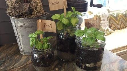 Piantine di basilico nei barattoli di vetro: un modo utile e originale per riciclarli