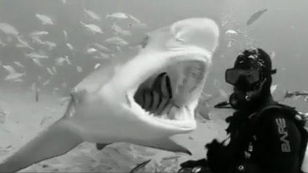 Il sub si avvicina agli squali: la loro reazione è incredibile