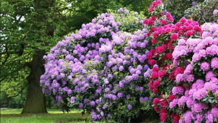 Riesci a trovare la donna nuda nascosta tra i fiori? La mimetizzazione è perfetta