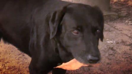 Negro, il cane che si comporta da umano, compra i biscotti ogni giorno pagando con una foglia