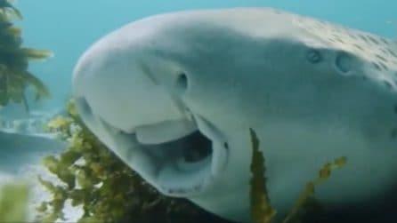 Il sub trova un curioso animale steso sul fondale: quello che fa quando si avvicina lo sorprende