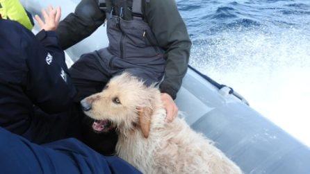 Pirata, il cane 'marinaio' che ama l'oceano e i soffi delle balene