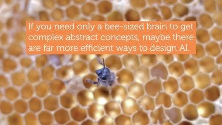 Le api sanno cos'è lo zero