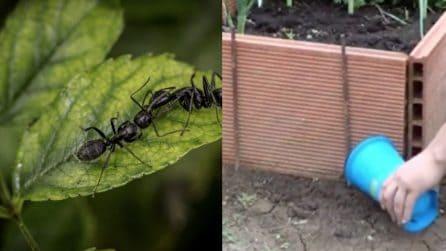 Come liberarsi delle formiche con un solo ingrediente: il trucco semplice ed efficace