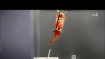 Arrivano i cyborg: giapponesi impiantano muscoli veri in un robot. Il video