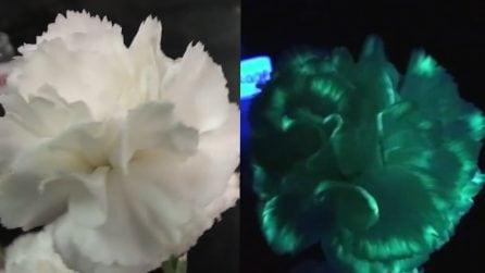 Colora i fiori con l'evidenziatore per un motivo preciso: il risultato è sorprendente