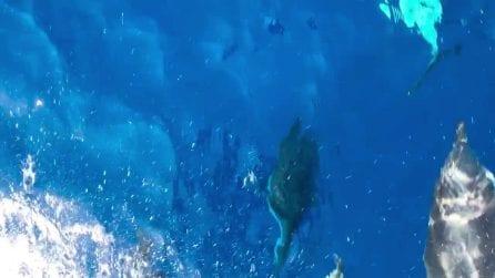 Ischia, avvistano qualcosa in mare: le immagini dalla barca sono incredibili