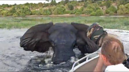 I turisti in barca si avvicinano troppo: la spaventosa reazione dell'elefante