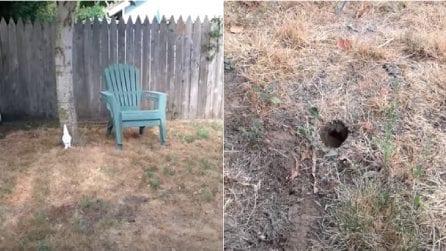 Sta tagliando l'erba quando nota un foro in giardino: fa una pericolosa scoperta