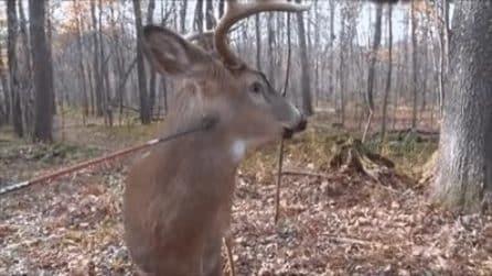 Il cervo si immobilizza come fosse imbalsamato: ma all'improvviso succede qualcosa d'assurdo