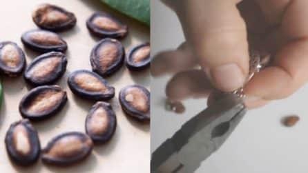 Non buttate via i semi dell'anguria: ecco come riciclarli in maniera creativa