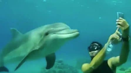 Fa un'immersione per fare un selfie con un delfino: la reazione dell'animale è bellissima