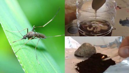 Zanzare in arrivo: ecco due metodi naturali per tenerle lontane