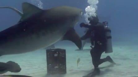 Faccia a faccia con lo squalo, allunga la mano verso di lui: la sua reazione è incredibile