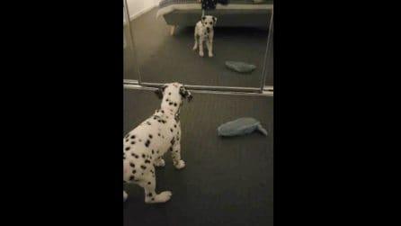 Il cane si avvicina allo specchio e vede la sua immagine: la reazione è tutta da ridere