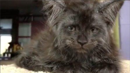 Il gatto dall'espressione umana conquista tutti su Instagram