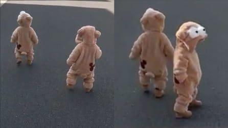 """Avvistati due piccoli """"orsi"""" camminare per strada: le immagini sono tenerissime"""