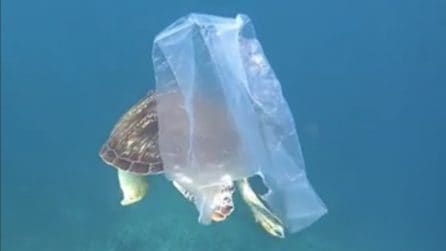 La tartaruga nuota tra i rifiuti: le immagini fanno riflettere sull'inquinamento