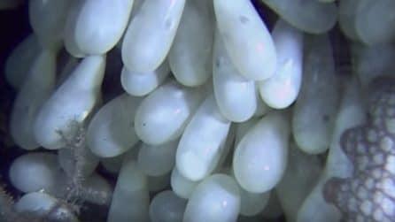 Le uova iniziano a schiudersi: guardate cosa si nasconde all'interno