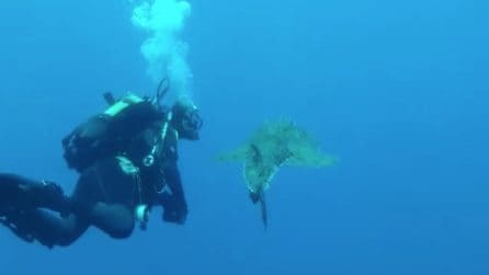 Incontro ravvicinato in fondo al mar: nel profondo degli abissi della costiera Sorrentina