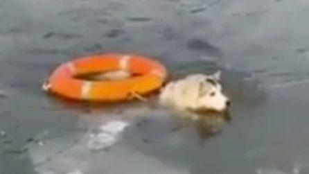 Vigili del fuoco salvano un cane dal lago ghiacciato a - 8°C