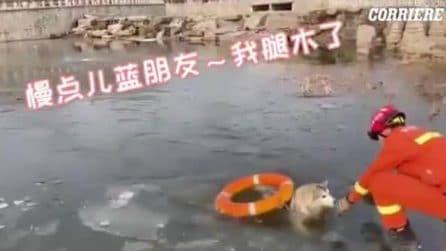 Il cane cade nel lago ghiacciato e sembra spacciato: salvato in extremis con un salvagente