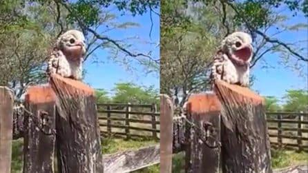 """La """"strana"""" creatura che somiglia a un muppet"""