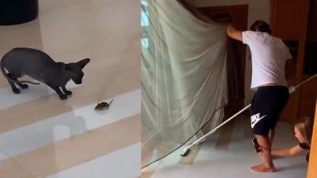 """Totti """"combatte"""" contro il topo entrato in casa, Ilary Blasi e i figli se la ridono"""