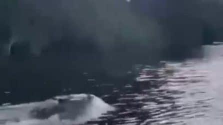 Sembra un delfino: ma quello che sfreccia in acqua è tutt'altro