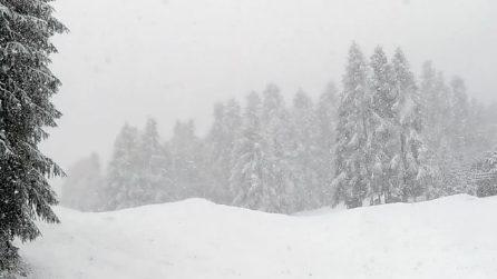 Alta Valtellina, prima nevicata d'autunno a Livigno e al passo Foscagno: albero cade sulla strada