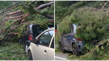 Albero caduto per forte vento in via di Novella: i vigili urbani salvano due ragazze
