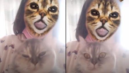 """Le divertenti reazioni dei gatti quando vedono i loro padroni che si """"trasformano"""" con un filtro"""