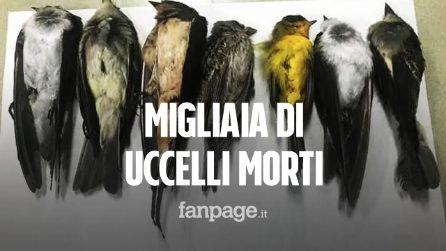"""Morti migliaia (forse milioni) di uccelli migratori, gli esperti: """"Disastro senza precedenti"""""""