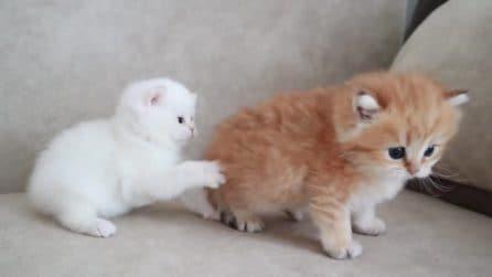 I due teneri gattini che fanno impazzire il web