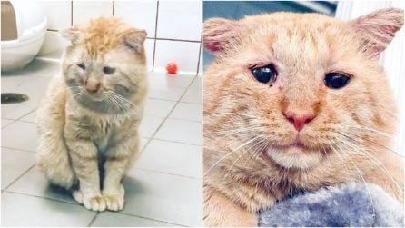 Era il gatto più triste del mondo: la sua trasformazione è un miracolo d'amore