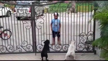I cagnolini seguono ogni mossa: il balletto improvvisato diventa virale
