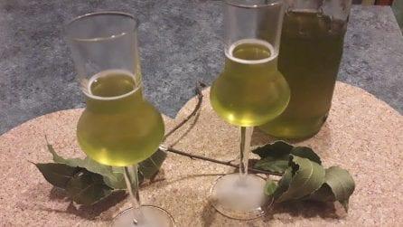 Liquore all'alloro: la ricetta per prepararlo perfettamente in casa