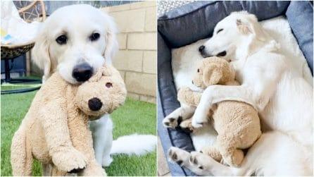 La cagnolina inseparabile dal suo peluche fin da cucciola: una dolcissima storia d'amore
