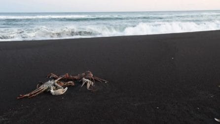 Ancora ignote le cause del disastro ambientale in Kamchatka