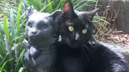 Il gatto innamorato della statua che gli somiglia