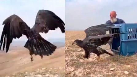 Il momento emozionante in cui un'aquila spicca il volo verso la libertà