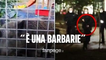 """Roma, la polizia spara a mamma cinghiale e ai suoi cuccioli: """"È una barbarie"""""""
