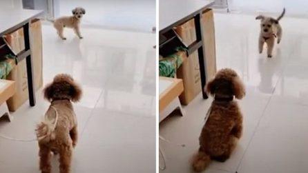 I tentativi del cagnolino per convincere l'amico a uscire e giocare con lui
