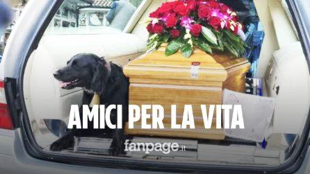 Lassie, il cane che ha accompagnato il feretro del padrone al cimitero, commuovendo tutti